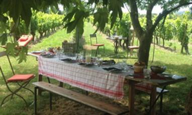 Un bar clandestin dans les vignes de Provence…