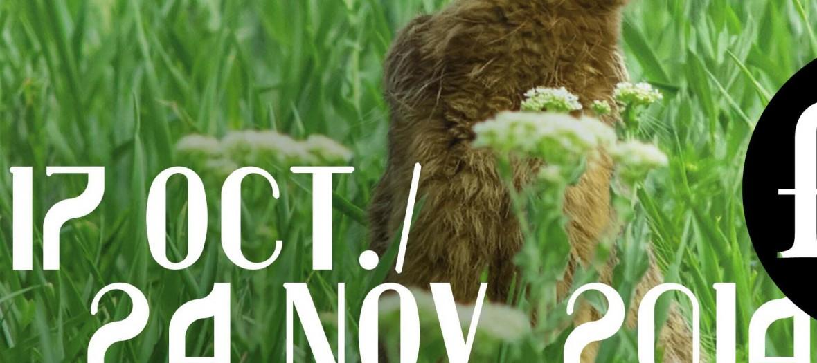 Aff Fiac2014 Lievre Czesznak Zsolt Shutterstock Com