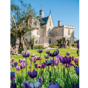 Printemps Tulipes Chateau Pape Clement