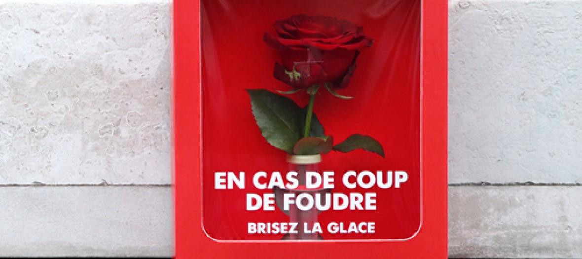 Des Roses Paris