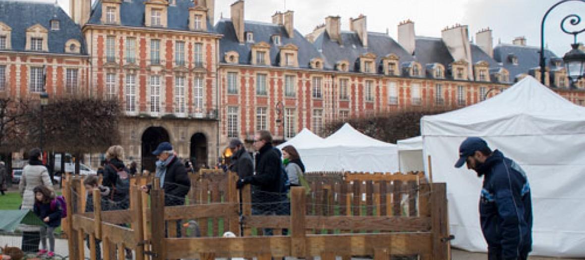 Une Ferme Et Des Biquettes Place Des Vosges