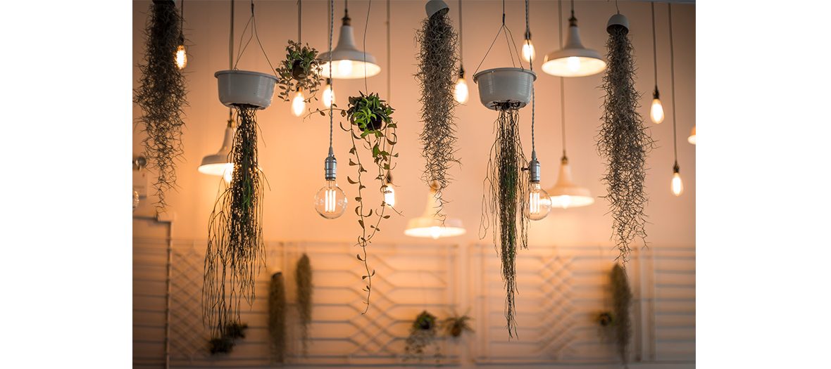 Suspended plants and lights
