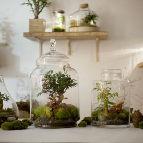 Green Factory La Boutique Des Plantes Quon N Arrose Pas