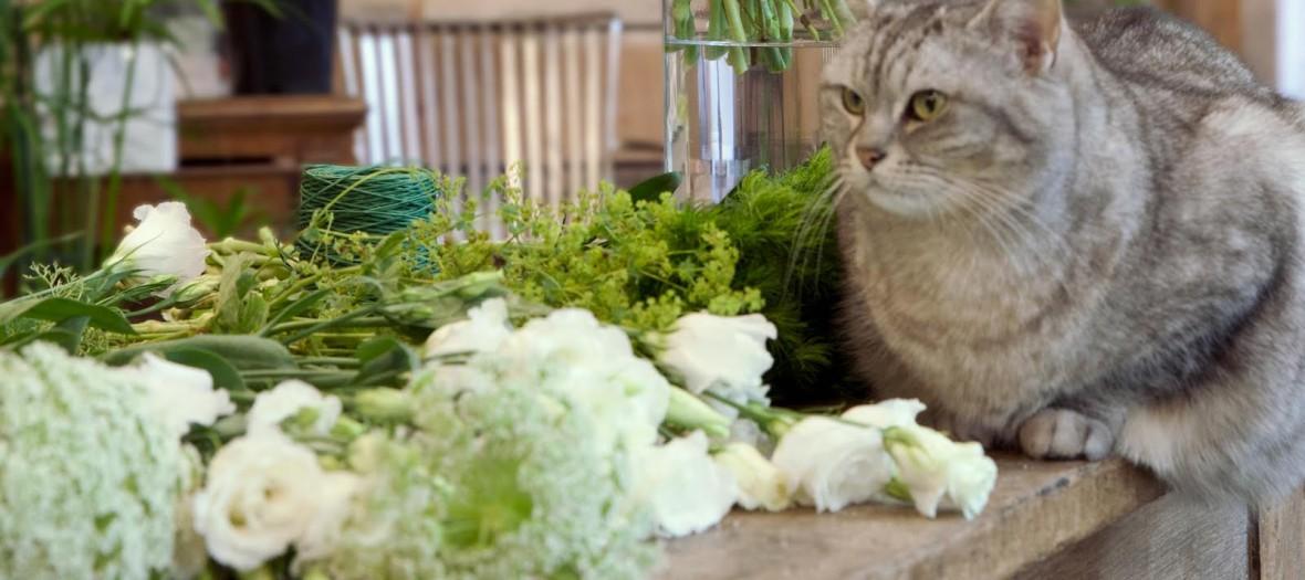 15un Bouquet En Take Away Chez Les Mauvaises Graines