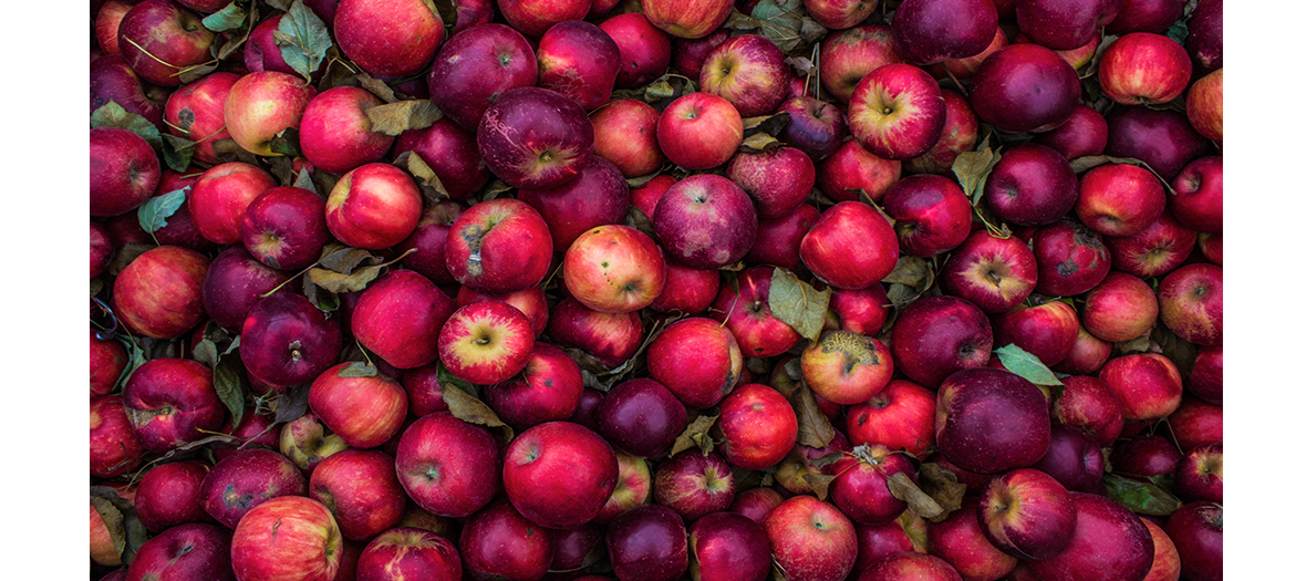 Batch of red apples