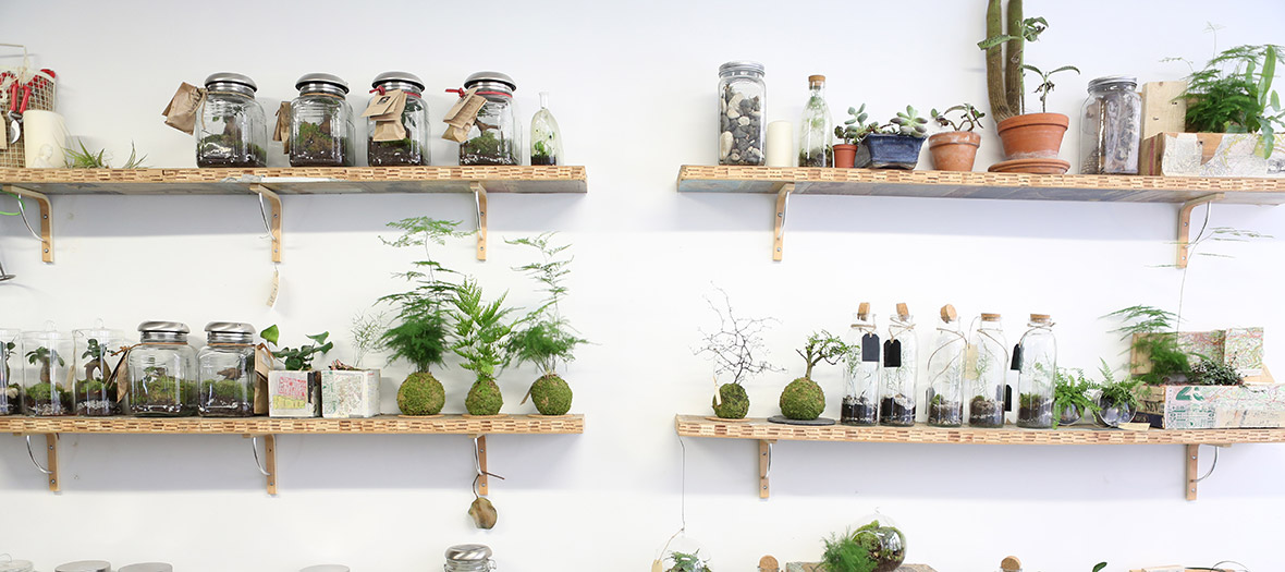 Internal decoration of the plant workshop with plants, grassland landscapes in glass or ceramic terrariums