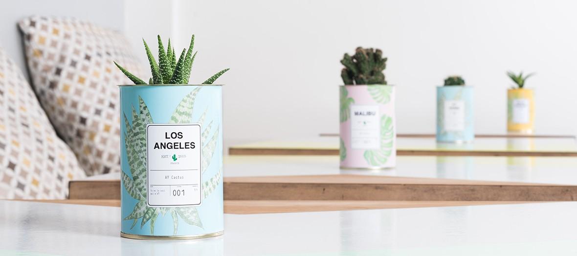 Petit cactus en conserve des concept store Ay