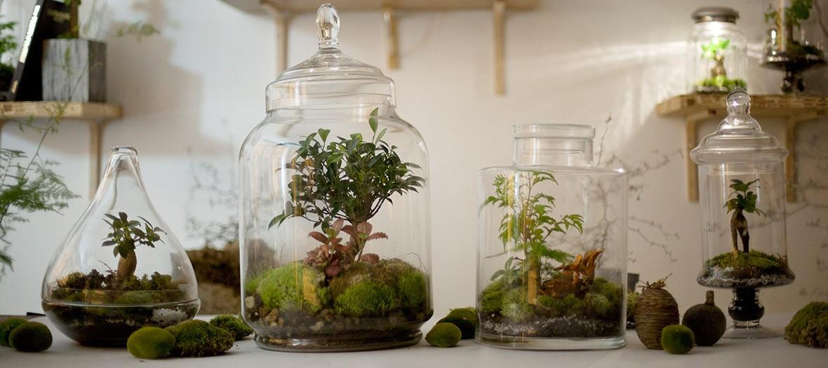 Des paysages de prairies dans des terrariums en verre à l'atelier végétal du Canal Saint Martin