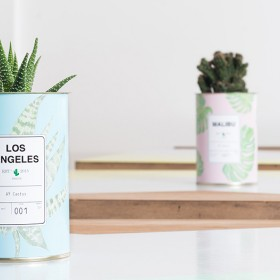 Little cactus in box by Ay concept store