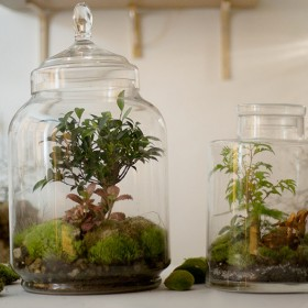 Landscapes of meadows in glass terrariums in the plant workshop of Canal Saint Martin