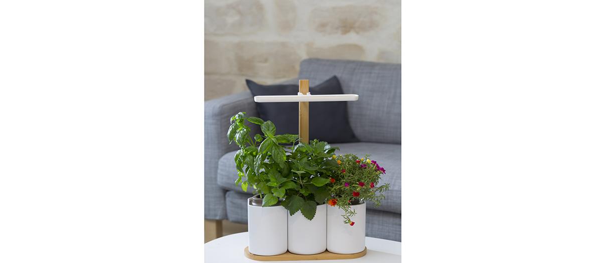 Id es cadeaux de no l lilo le jardin d int rieur des for Jardin lilo