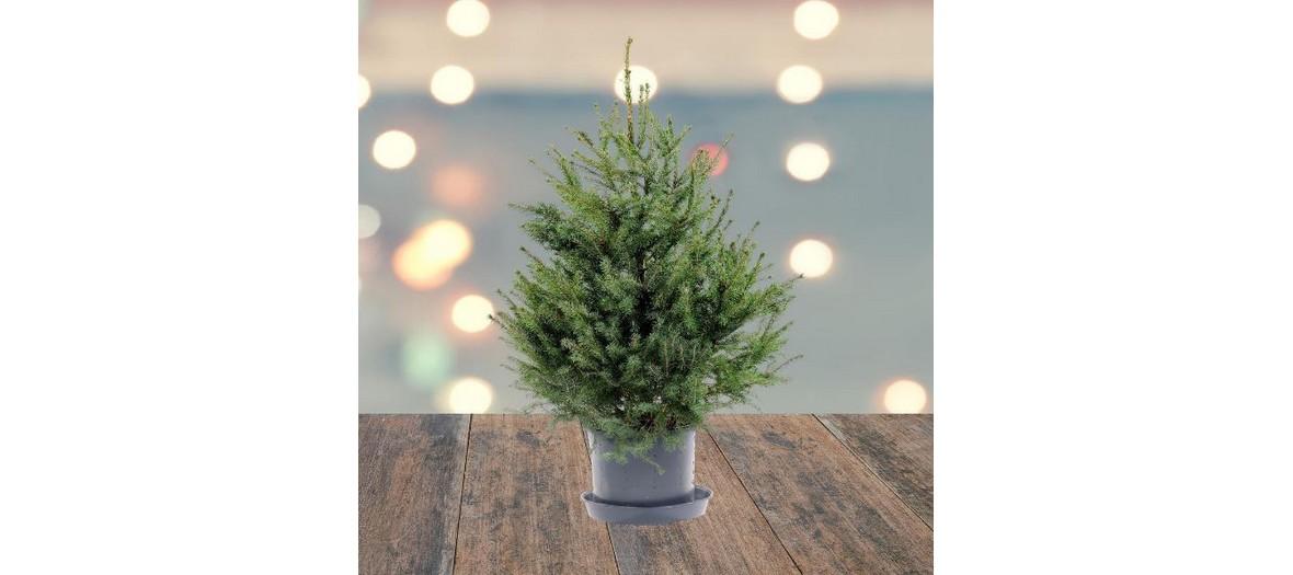 christmas tree treezmas