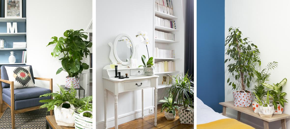 plantes et moi décoration
