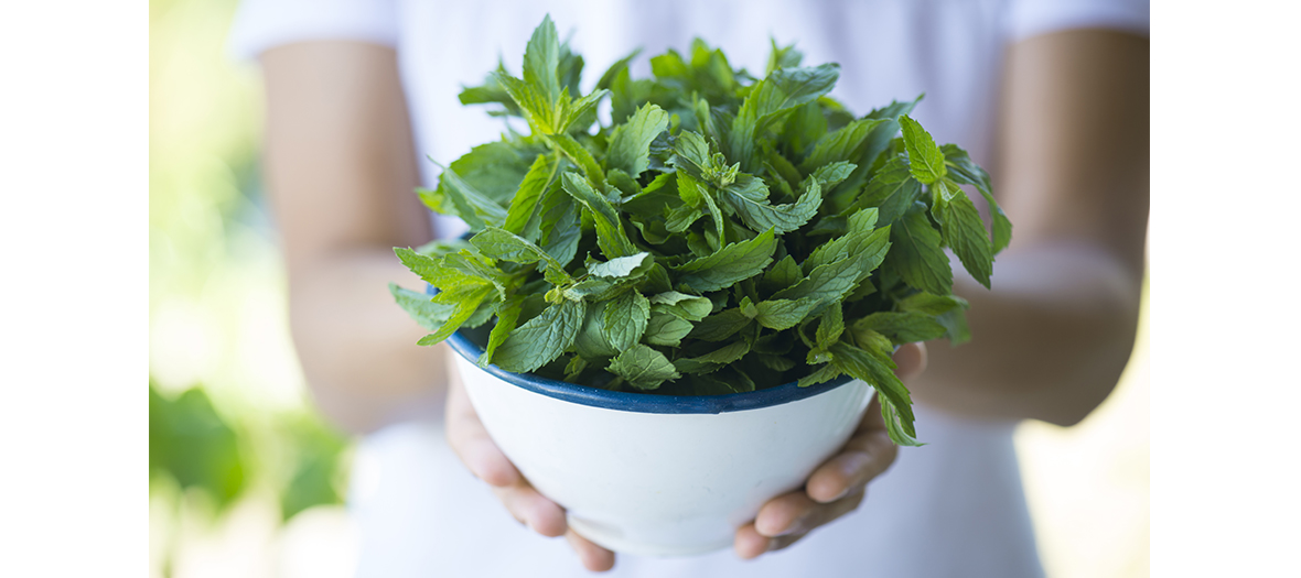 Remede naturel contre l'acnee avec des feuilles de menthe et des clous de girofle