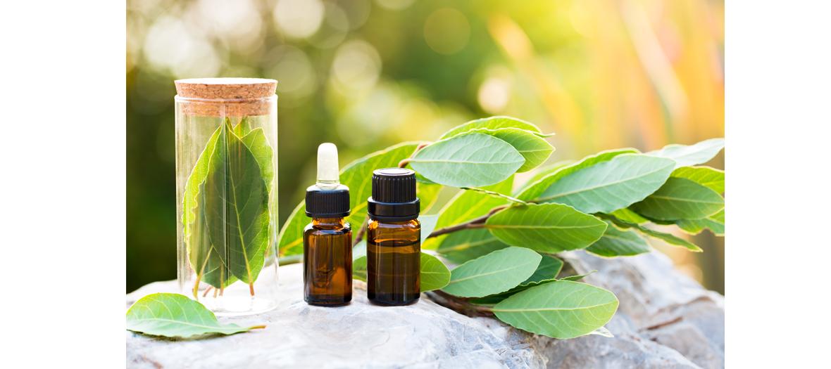 Remede naturel contre la fatigue avec des feuilles et des baies de lauriers