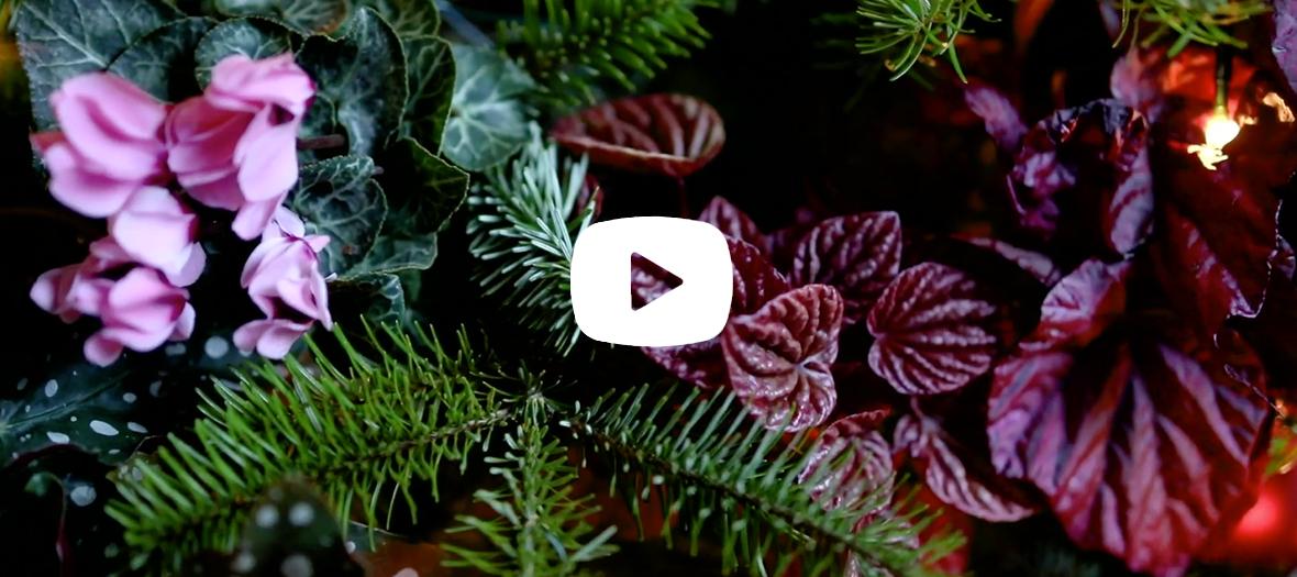 Atmosphère végétale pour Noël