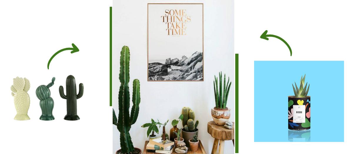 mini cactés, cactus