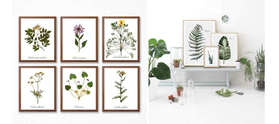 herbiers deco