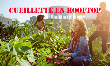 The rooftop-vegetable gardens of Parisians