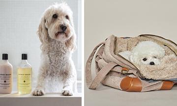 Concept store en ligne pour les chiens