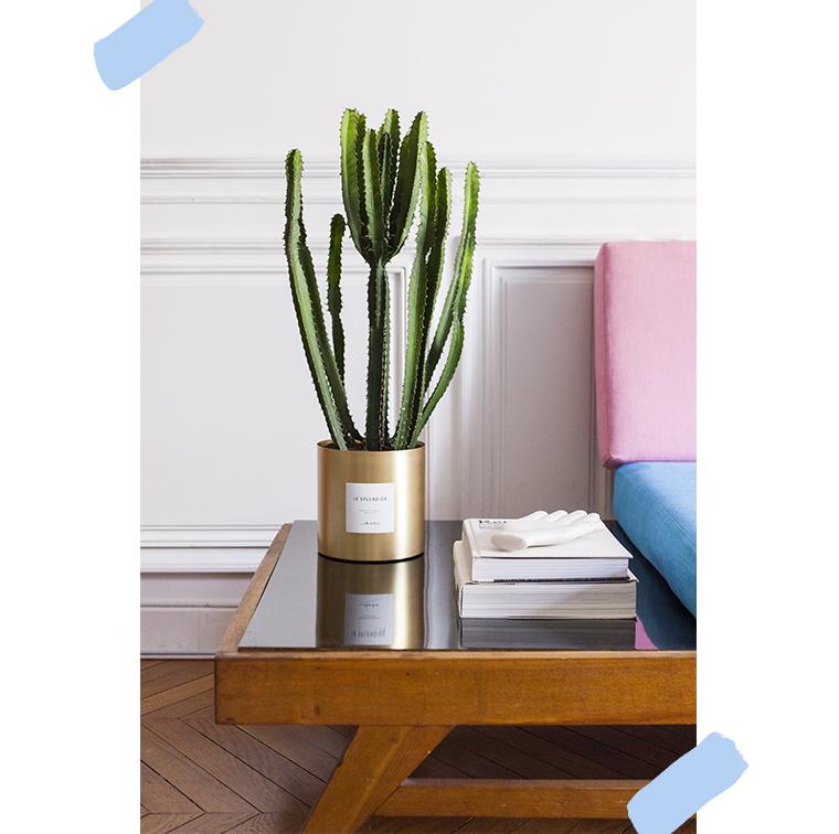Cactus dans un appartement
