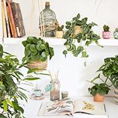 Boutiques de plantes et cactus
