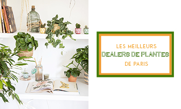 The most stylish plant and cactus shops in Paris