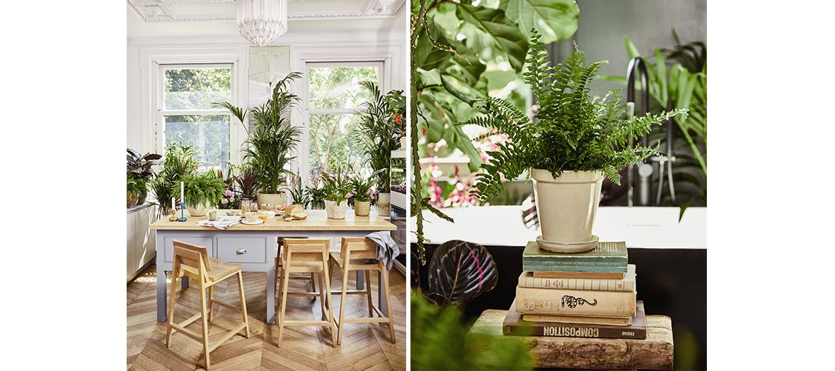 Beautifull Maplantemonbonheur plant in a living room in Paris