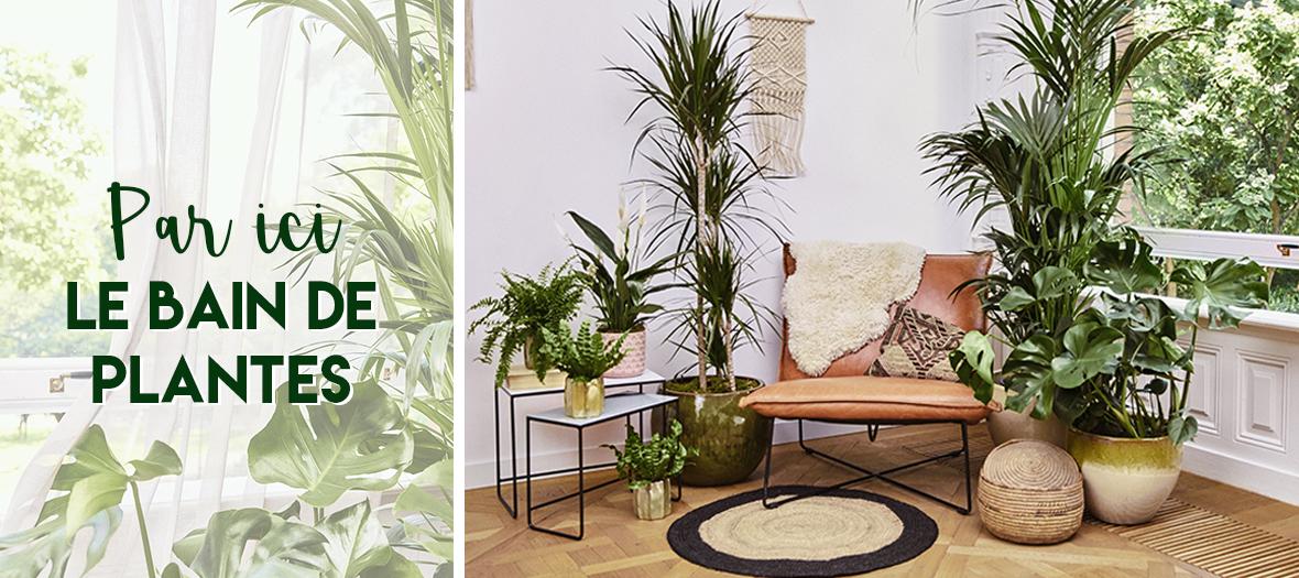 Plantes Maplantemonbonheur dans un salon