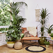Maplantemonbonheur plant in a living room in a flat in Paris