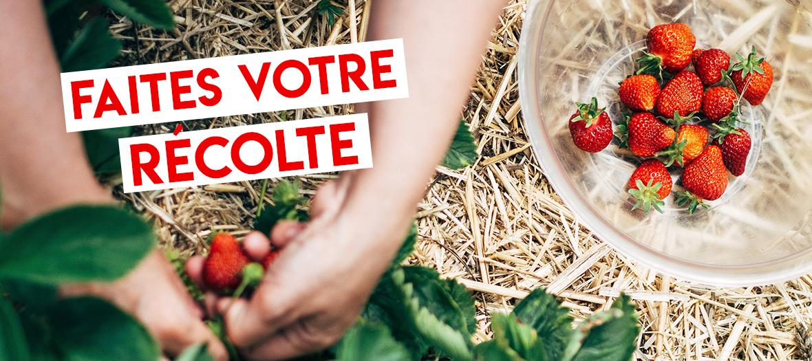 Chapeaudepaille strawberry Picking near Paris