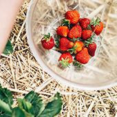 Cueillette de fraises près de Paris