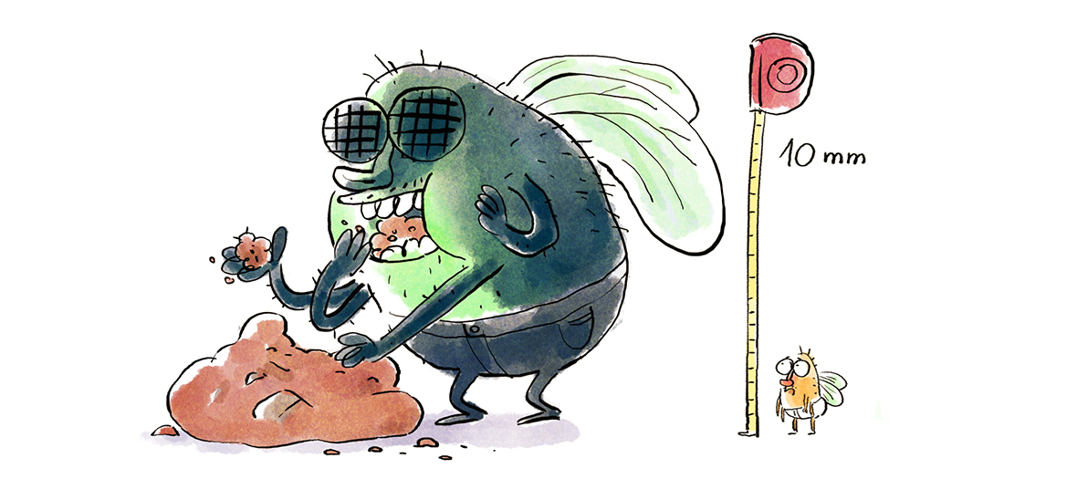 bande dessiné de Marion Montaigne