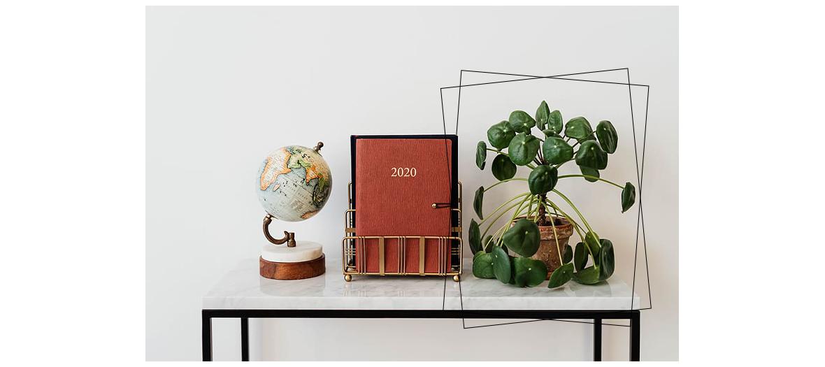 La plante le pilea est capables d'améliorer la qualité de l'air sur une petite surface de 10m²
