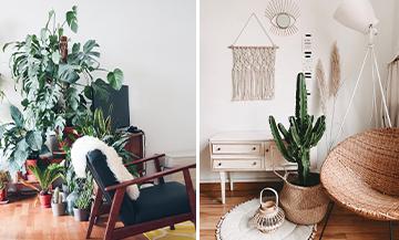 7 plantes pour détoxifier son appartement