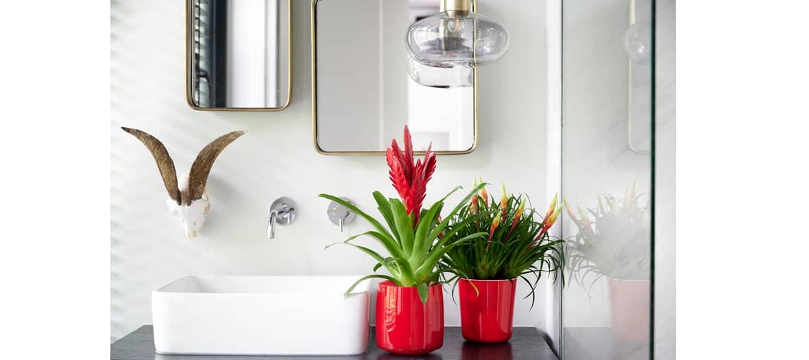 Plante d'interieur bromelia dans un salle de bain pour un effet jungle bathroom
