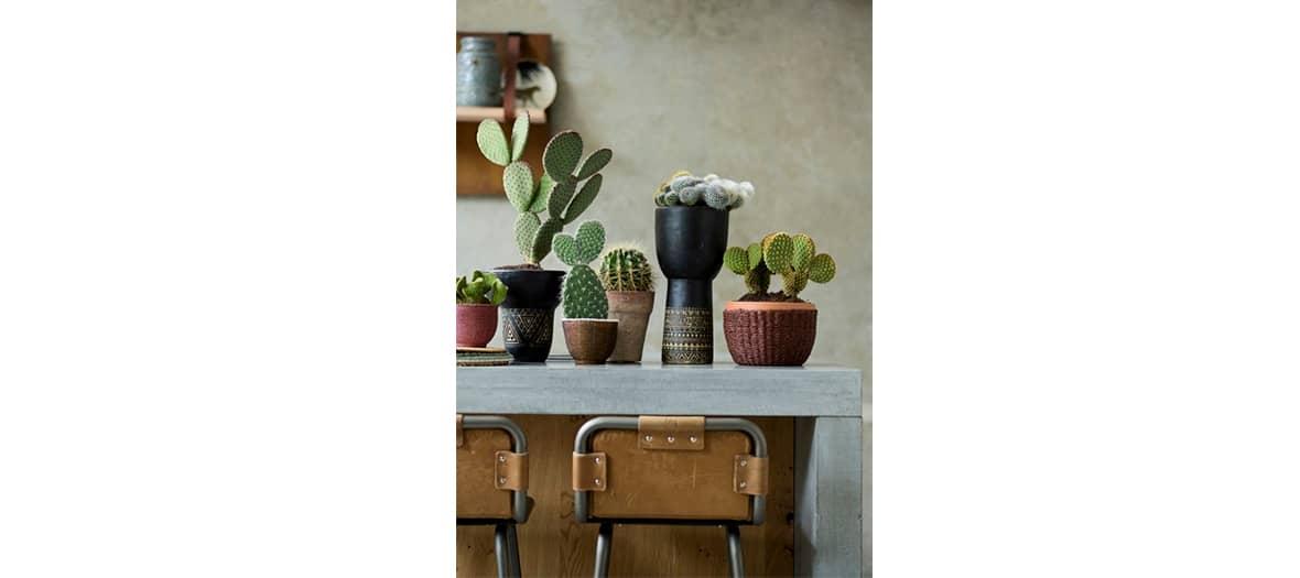 Plantes détox cactus MercilesPlantes aux pouvoirs dépolluant