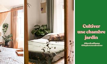 Améliorer son sommeil graâce au Jasmin, la Plantes Ananas et l'ashwagandha par Merci Les Plantes.