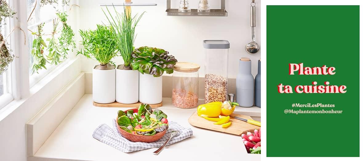 mercilesplantes-cuisine