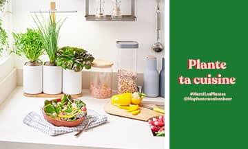 Toutes les plantes à cultiver dans sa cuisine avec l'aloé véra, la misère, sauge, bourrache, oxalys, shiso ou basilic grenat