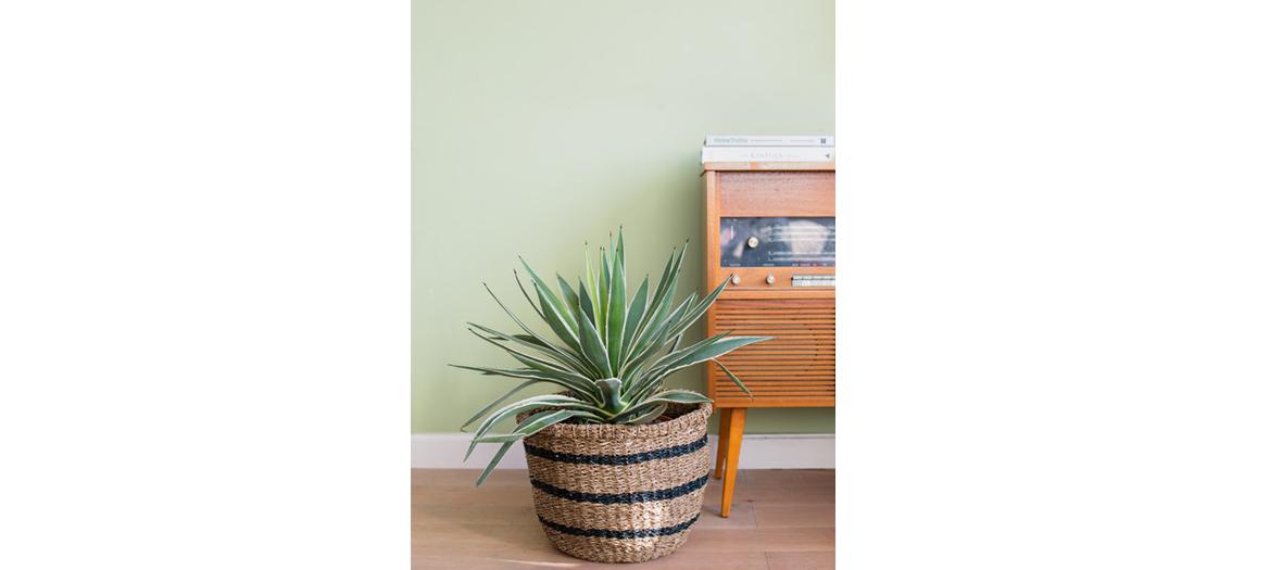 salon de musique avec pothos, cactus et yucca.