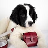 Collier avec pochettes pour chiens et les sacs à main assortis à leurs maitresses