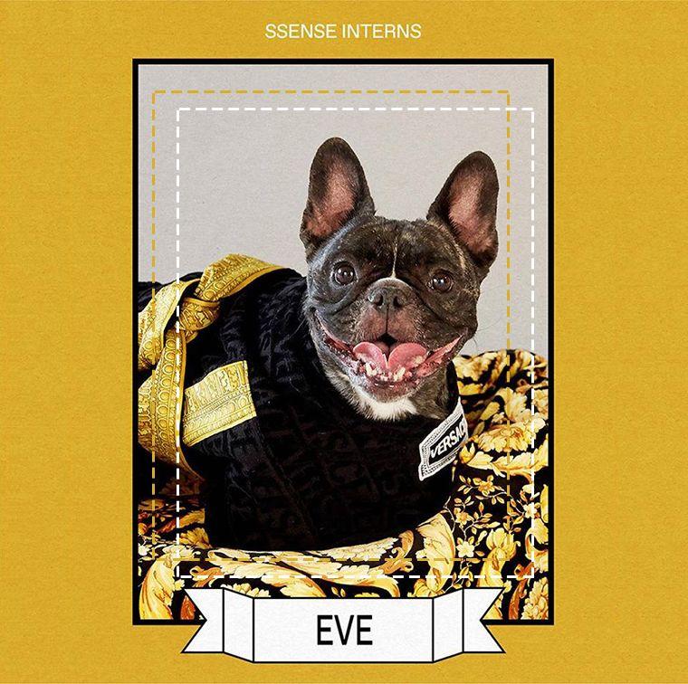 Peignoir pour chien noir Barocco, Versace
