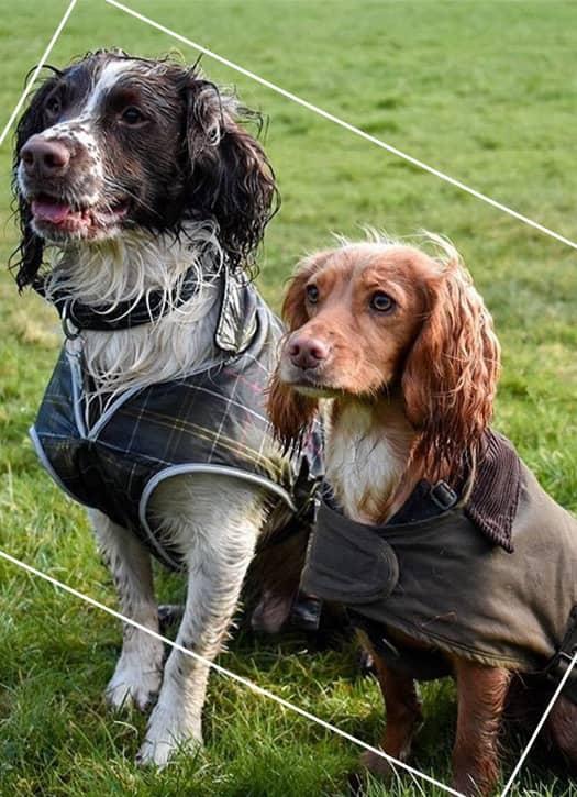 manteau Barbour à doublure tartan pour les chiens