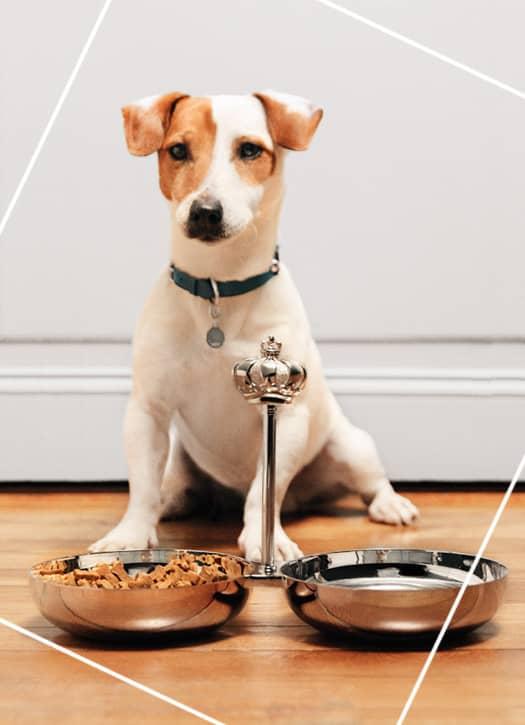 Ecuelle double bols en métal argenté pour chien, Christofle