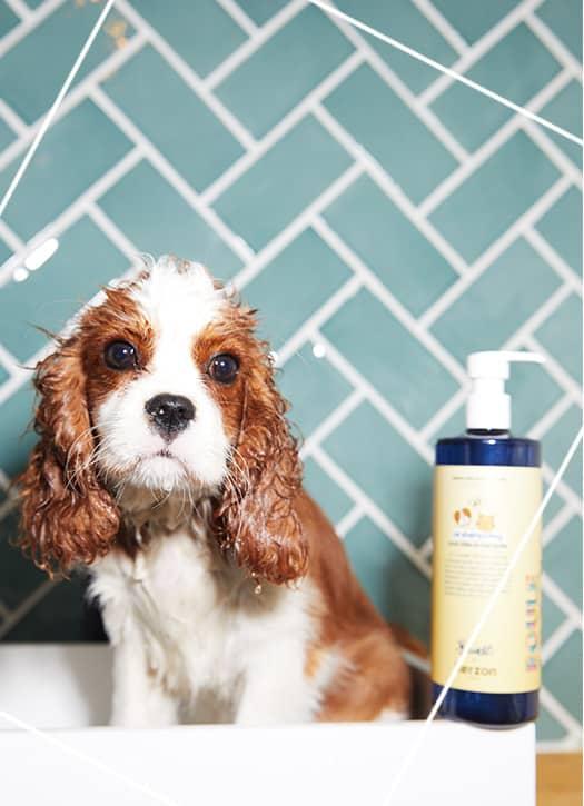 Kit pour le bain pour chien, Kerzon x Bandit