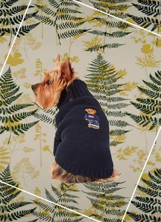 Pull Polo Bear pour chien en laine, Ralph Lauren