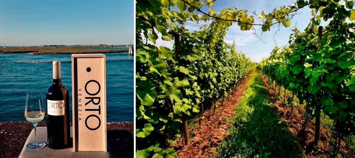 Le grand vin Orto Di Venezia, et l'unique cave à vins de Venise.