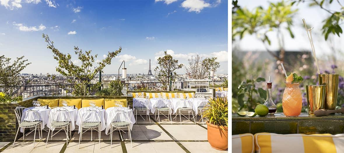 rooftop-perruche