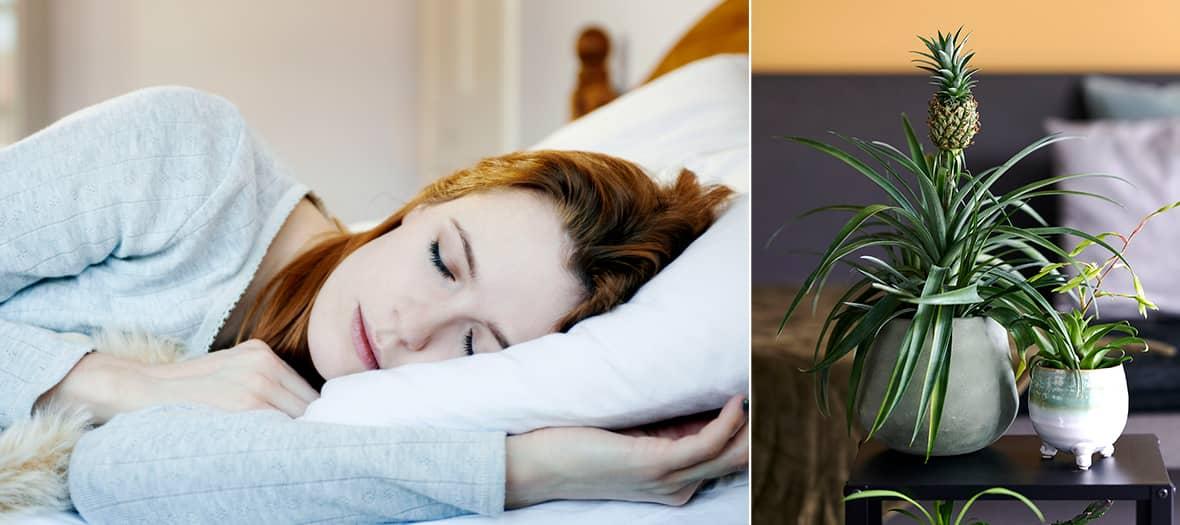 Le bromélia ananas, la plante pour bien dormir